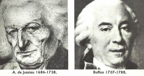 A. De Jussieu et Buffon